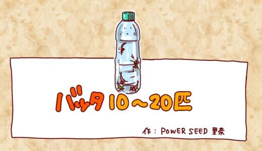 バッタ10〜20匹